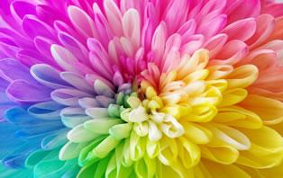 野田奈央 自分らしく美しく生きるエッセンス カラーで自分の個性がわかる「キレイデザイン学」とは?
